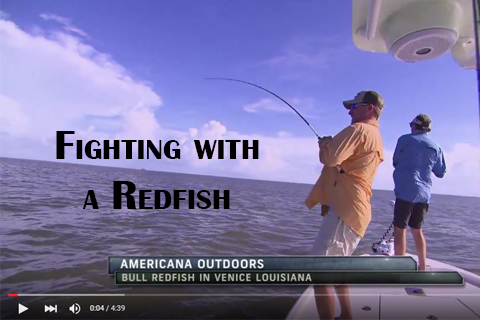 Fighting with a Redfish