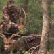 South Texas Axis Deer Hunt